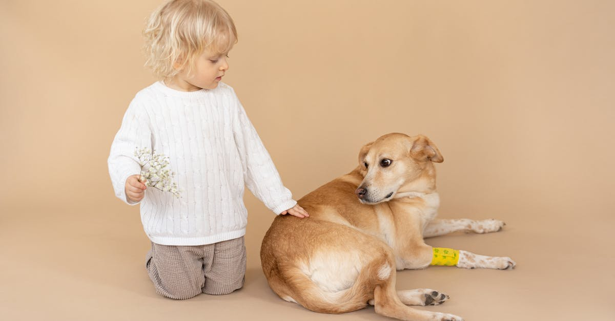 holistic healing for dogs